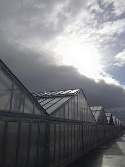 Greenhouse, - JEDF000216