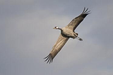 Flying crane - HACF000224