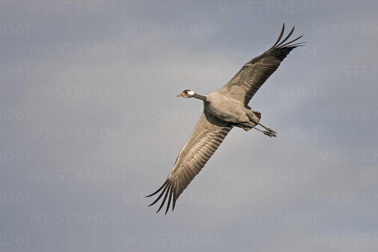 Flying crane - HACF000224 - Hans Clausen/Westend61