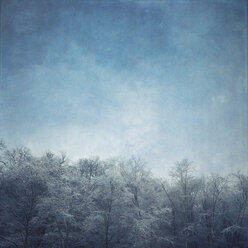Germany, frost-covered treetops - DWIF000367