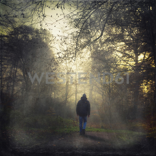 Germany, man walking on forest track in the morning - DWIF000373