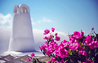 Greece, Cyclades, Santorini, Oia, blossoming Bougainvillea, Bougainvillea spectabilis and white chimney - EH000018
