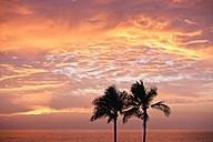 USA, Hawaii, Big Island, Kohala Coast, silhouettes of two palms at sunset - BRF000897