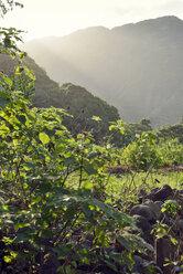 USA, Hawaii, Big Island, Waipio Valley, vegetation at evening light - BRF000975