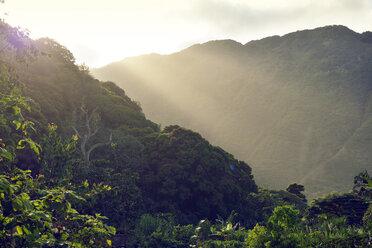 USA, Hawaii, Big Island, Waipio Valley, vegetation at evening light - BRF000976