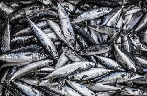 Portugal, Sagres, mackerel fish - KBF000271