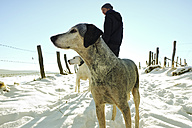 Germany, Bergisches Land, man walking dogs in winter landscape - ONF000737