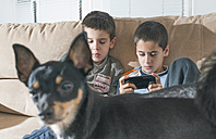 Two boys playing with their smartphones while dog standing in the foreground - DEGF000109