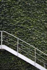 Germany, Munich, exterior wall vegetated with wild wine and white stairs - AXF000740