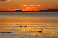 Germany, Bavaria, evening at Chiemsee - SIEF006342