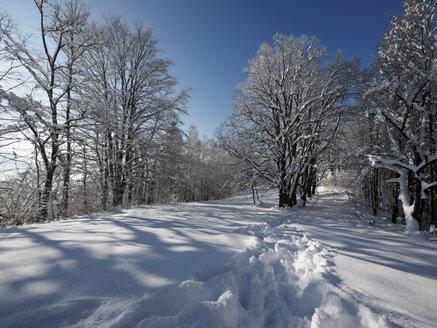 Germany, Kochel am See, winterlandscape - LAF001373
