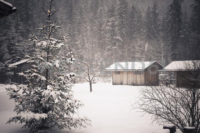 Germany, Bavaria, Berchtesgadener Land, wooden hut in winter landscape - MJF001389