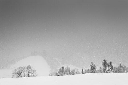 Germany, Bavaria, Berchtesgadener Land, winter landscape - MJF001392