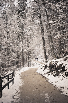 Germany, Bavaria, Koenigssee, forest path in winter - MJF001406