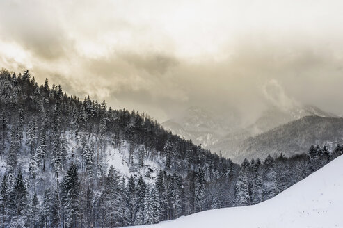 Germany, Bavaria, Berchtesgadener Land, winter landscape - MJ001419