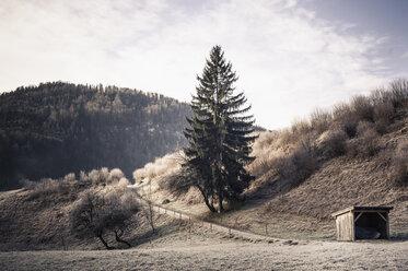 Germany, Bavaria, Berchtesgadener Land, rural landscape - MJF001461