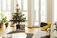 Modern loft living room with potted blue spruce Christmas tree - MFF001349