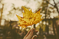 Woman's finger holding autumn leaf - MFF001356