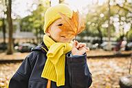 Toddler hiding behind autumn leaf - MFF001362