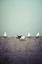 Four seagulls in front of water - KRPF001211