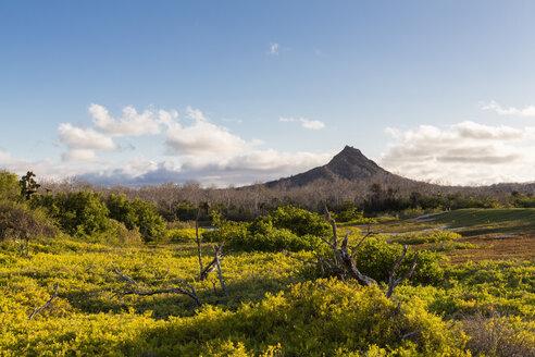 Ecuador, Galapagos Islands, Santa Cruz, view to volcano - FOF007273