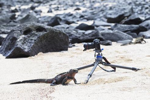Ecuador, Galapagos Islands, Espanola, beach with camera and marine iguana - FOF007297
