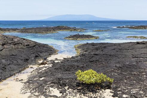 Ecuador, Galapagos Islands, Isabela, coast with Galapagos sea lions - FOF007328