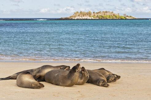 Ecuador, Galapagos Islands, Santa Fe, six sea lions lying on beach at seafront - FOF007418