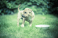 Puppy with drinking bowl on a meadow - NNF000336