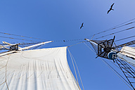 Rigging with sail of a sailing ship - FOF007541