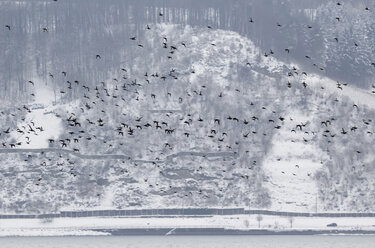 Germany, Lake Constance and flying birds in winter - JTF000614