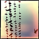 birds sitting on electrical wires, yangon, myanmar - LULF000115