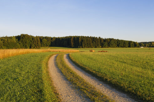 Germany, Upper Bavaria, Berg, Hoehenrain, dirt track in the morning - SIEF006366