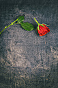 Broken red rose on wooden background - ON000784