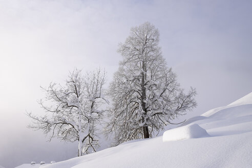 Germany, Bavaria, Upper Bavaria, Mangfall Mountains, Hocheck near Oberaudorf, snow covered trees - SIEF006370