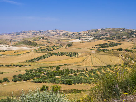 Italy, Sicily, Enna Province, fields and olive orchards near Piazza Armerina - AMF003595