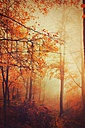 Germany, Wuppertal, forest in autumn - DWI000384