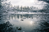 Germany, Bavaria, Ergolding, Pond with birds and swan in winter - SAR001271