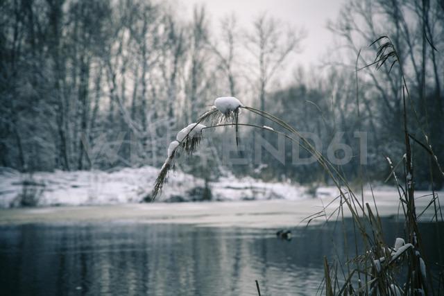 Germany, Bavaria, Ergolding, Pond in winter - SARF001266