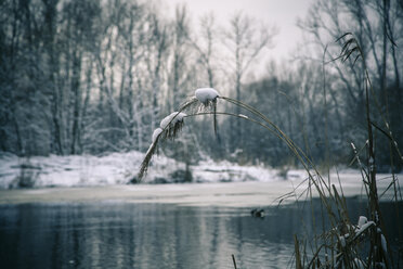 Germany, Bavaria, Ergolding, Pond in winter - SARF001266