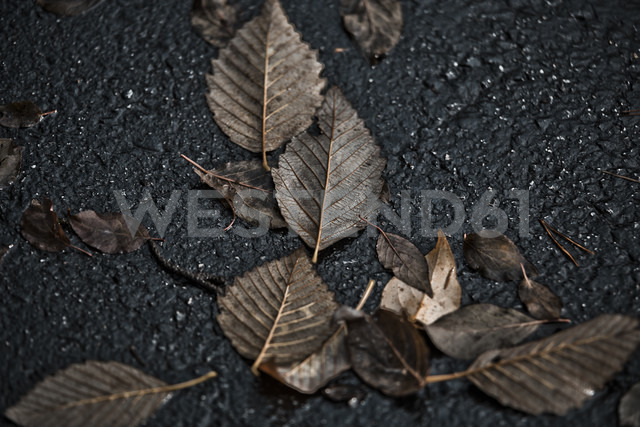 Autumn Leaves - NGF000154 - Nadine Ginzel/Westend61