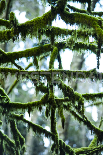 Canada, North Vancouver, moss grown tree - NGF000169
