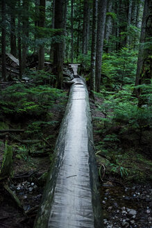 Canada, North Vancouver, Forrest trail in North Vancouver - NG000184
