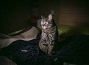 Tabby cat siiting on bed at home - RAEF000009