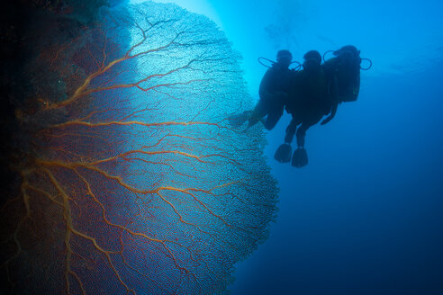 Pacific Ocean, Palau, scuba divers in coral reef with Giant Fan Coral - JWAF000210