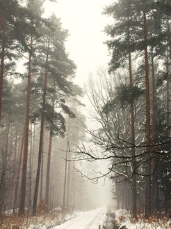 Forest in winter, Nuremberg, Germany - VRF000141