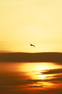 Flying seagull at sunset - KRPF001222