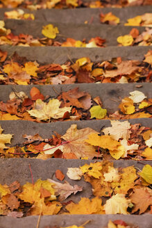 Germany, stairs with autumn leaves - JTF000623