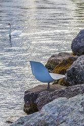 Switzerland, Geneva, seat and mute swan at Lake Geneva - WDF002822