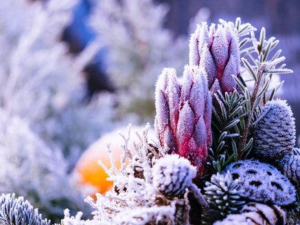 Germany, grave yard, flowers on grave in winter - KRPF001181